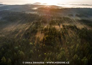 Povltavský les v mlžných čarách /J28