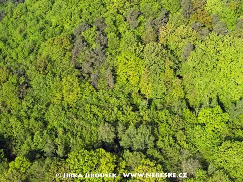 Jarní zeleň J6