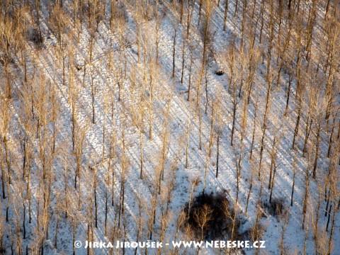 Zimní listnatý les /J117