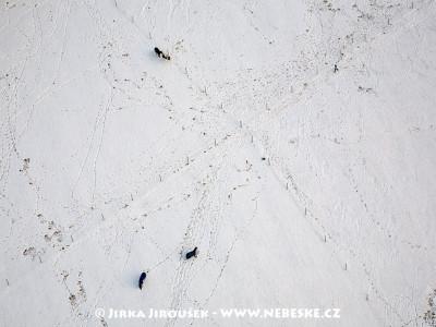 Horse Park Kamenný dvůr. Koně na zimní pastvě. /J129