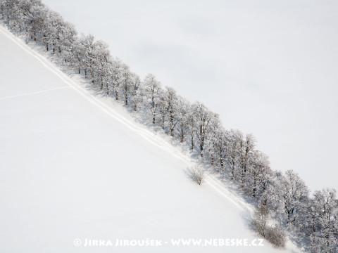 Stromořadí nedaleko obce Keply /J761