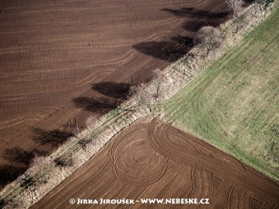 Pole a stromořadí u Řísnice /J223