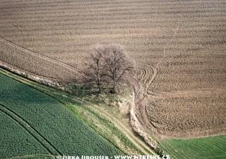 Stromy mezi poli u Trhového Štěpánova /J231