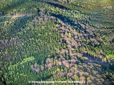 Les na vrcholu Kuchyňka v Brdech /J197