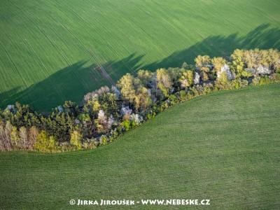 Jarní stromořadí u Kytína /J203