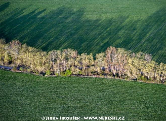 Stromy u silnice uprostřed jara /J204