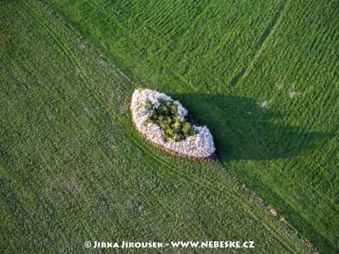 Kvetoucí remízek u Mníšku /J207