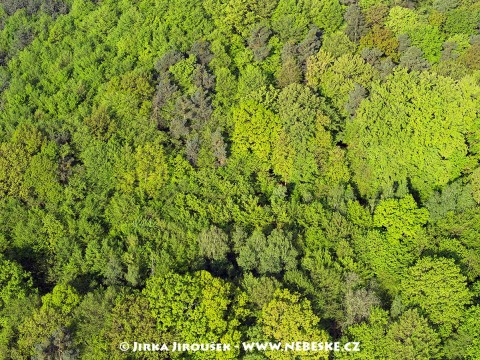 Jarní les /J664