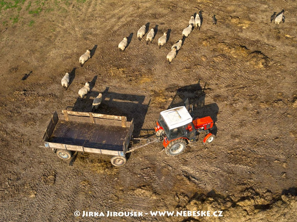 Ovce u Křepenic /J667