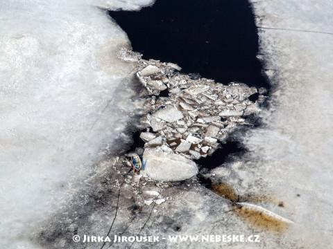 Tající ledy na Lipně