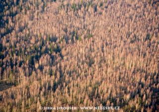 Listnatý les v Brdech po opadání /J806