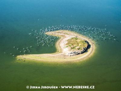 Ostrůvek na rybníku Velký Tisý – Třeboňsko J1497
