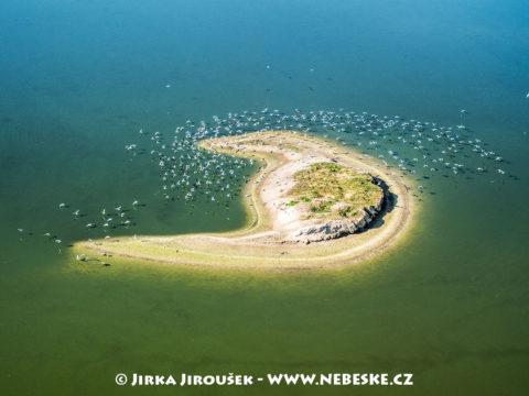 Ostrůvek na rybníku Velký Tisý – Třeboňsko