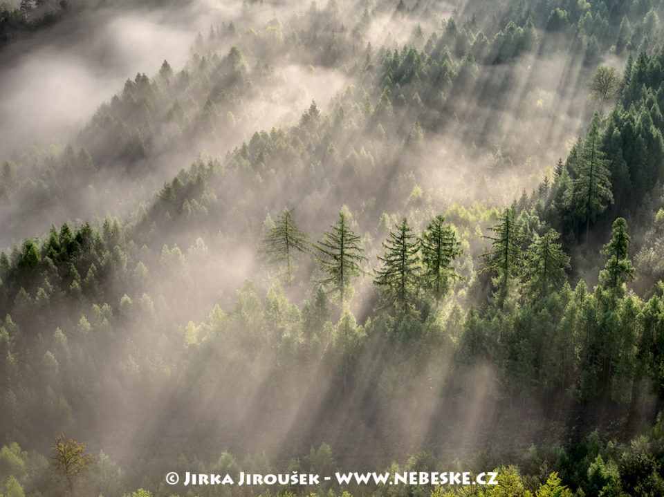 Lesy v Brdech u Hluboše J1618