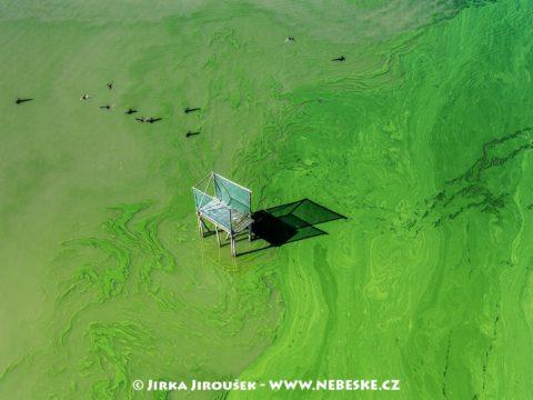 Rybník Posměch v létě J1564
