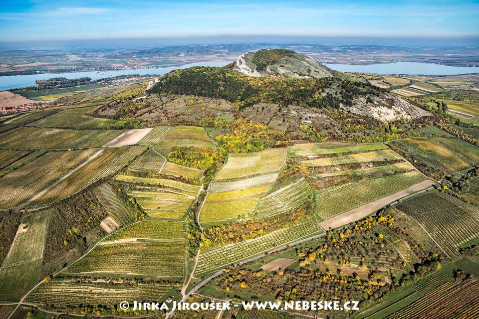 Pálava a podzimní vinice J1681