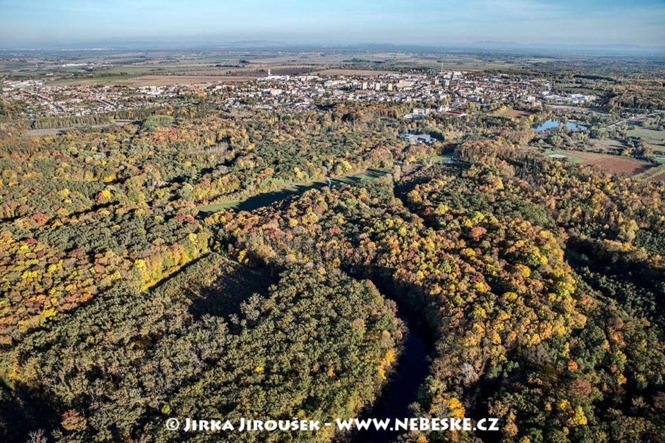 Břeclav – podzimní lesy J1831