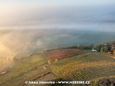 Jeviněves – vinice J2431