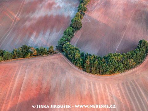 Džbán – u Kounova J2642
