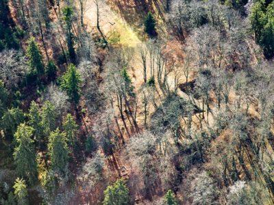 Třemšín, 2010 J2918