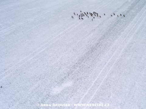 Srnky na poli v zimě J2766