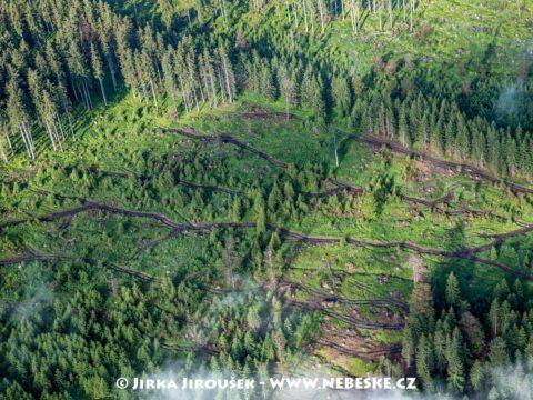 Těžba dřeva v Boleticích 2020 J2895