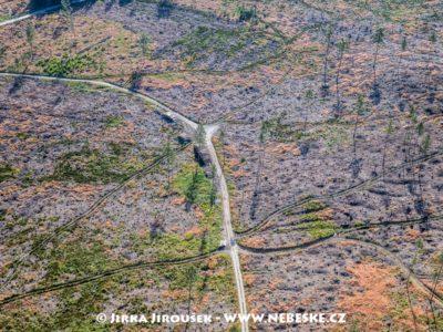 Lesy 2019 u Zlatý Hor J3390