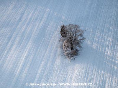 Chlum u Třeboně – strom J3258